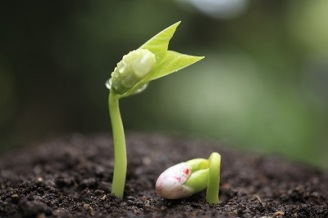 Sprouting-Seed (1)